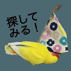 コザクラインコのぽぽちゃん2