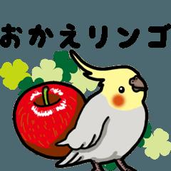 オカメインコ ピーちゃん Vol.3 ダジャレ