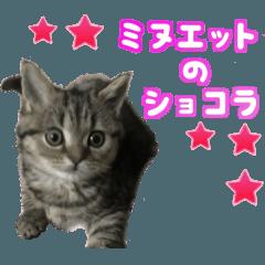 ミヌエットのショコラの子猫写真スタンプ2