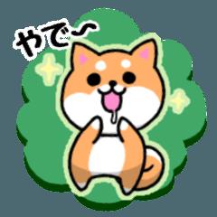 大阪弁の柴犬さん (リメイク)