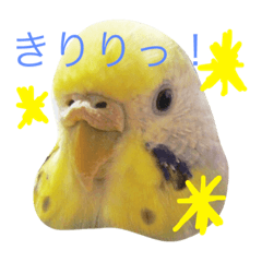 あおちゃん家のインコ PART1