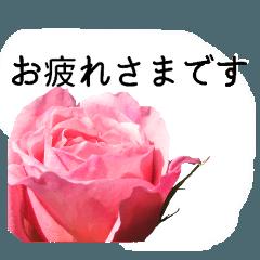 暮らしに花を♪バラ(お仕事)