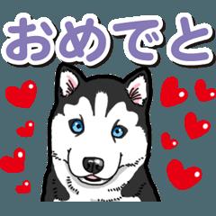 わんこ日和 シベリアンハスキーの仔犬4