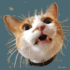 ヒグチユウコ 猫のボリス・スタンプ その3