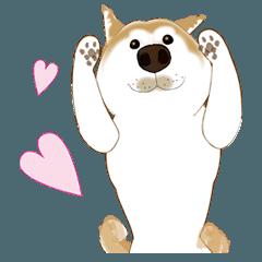 かわいい柴犬2