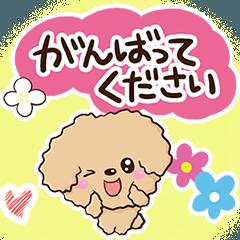 トイプードル【アプリコット】