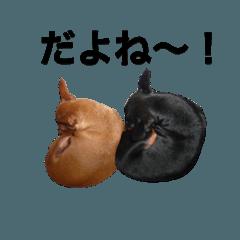 日常会話ミニピン③