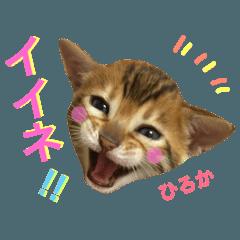 ひろか ベンガル 猫 挨拶 会話 画像