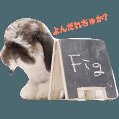 ふわふわ犬うさぎのふぃぐちゃん 2017夏〜1
