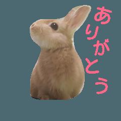 うさぎの大豆くんスタンプ(そい1)