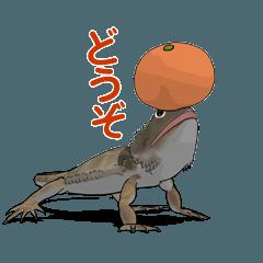 動くフトアゴヒゲトカゲ