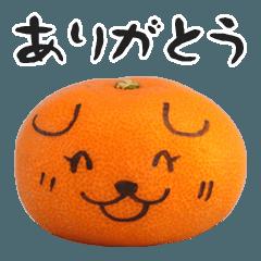 みかん犬の日常【みかん編Vol.2】