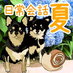 チワワのCOCOとLOUIS 日常会話編【夏】
