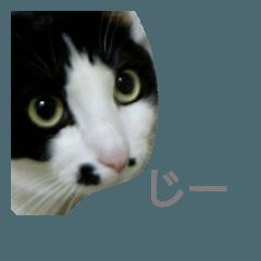 カイの猫スタンプ