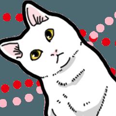 [LINEスタンプ] 白猫びより