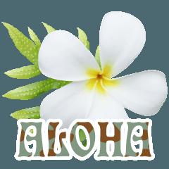 アロハ-03