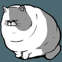 0.1トン猫