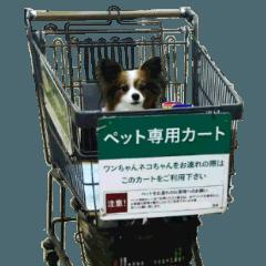 パピヨンのキキ【40個セット】