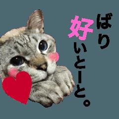 猫の気持ち-にゃんちょびここ-福岡弁入り!