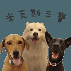 My 3 mix doggies