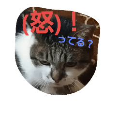 不機嫌な猫のお嬢さん
