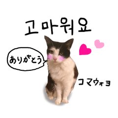 [LINEスタンプ] ハングルをしゃべる猫 (1)